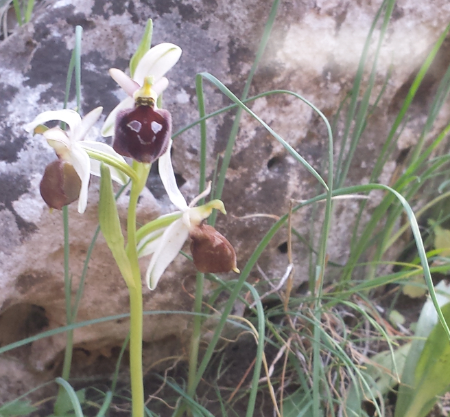 sentiero delle orchidee